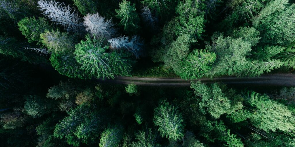 low angle photo of pine trees
